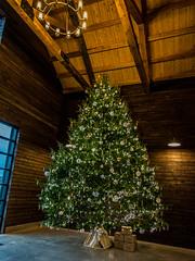 Xmas_tree-1_MaxHDR_Crop (old_hippy1948) Tags: christmas christmastree holiday