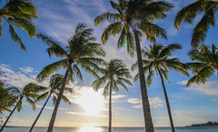 Coconut Tree Sunset (Andy.Gocher) Tags: andygocher newcaledonia noumea sky trees beach sea water sun sunset tree ocean