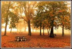 Matin d'automne. (Les photos de LN) Tags: automne nature paysage chênes feuillages couleurs teintes coloris tapisdefeuilles brume brouillard forêt bois tables bancs