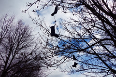 boots in the air [Explored] (KevinIrvineChi) Tags: eastwood bootsintheair inthe air boots trees hanging spring 2017 sky clouds blue lookingup sony dscrx100 chicago illinois albanypark kedzieavenue explored flickrexplore explore flickr