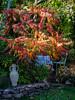Garden idyll 1 (flickrolf) Tags: garden garten essigbaum sumach sumac red yellow green white