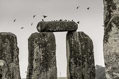 The Birds of Stonehenge (Harry2010) Tags: stonehenge england