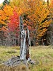 Former Majestic Tree (clickclique) Tags: majestic tree old remains relic stump weathered broken swamp fall colors colours red orange green grey nature outdoors magicofphotography 10000views l1gestalt