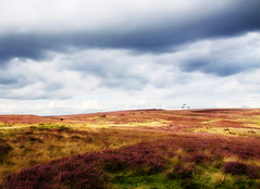 Grouse Lands (maureen bracewell) Tags: yorkshire clouds heather moorland grousebutts sport northyorksmoors nature bilsdale hawnby england shooting walking track fantasticnature