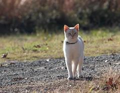 Paradise Landing Cat 001 (Val Hightower) Tags: cat paradiselanding mayflowerarkansas mayflower arkansas lakeconway