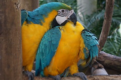 "Parrots • <a style=""font-size:0.8em;"" href=""http://www.flickr.com/photos/28558260@N04/38946903392/"" target=""_blank"">View on Flickr</a>"