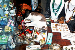 No Sleep 'Till Brooklyn! (kirstiecat) Tags: cat chat gato shop display jewelry shopwindow brooklyn nyc newyorknew york citycat nappurrfelinekittyno sleep till meow caturday