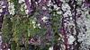 29-11-2017 036 (Jusotil_1943) Tags: 29112017 tronco verdin musgo antoje