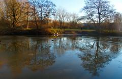 Still Water (Smiffy'37) Tags: 7dwf landscape lake reflections trees winter nature water sundaylights