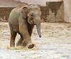 FUN ON A RAINY DAY (babsbaron) Tags: nature tiere animals elefanten elefant elephant zoo erlebniszoo hannover rain rainy day fun