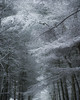 Patterns (John Ormerod) Tags: snow trees woods forest patterns branches winter cold england uk lancashire nikon photography photograph photo