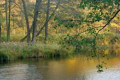 DSC_1962 (FMAG) Tags: 2017 żabieniec zalesie jesien