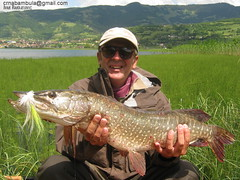 Pike On The Fly (crnabambula) Tags: pike fly flyfishing mixmaster flyfishingmix montenegro plav lake bosnia serbia guide