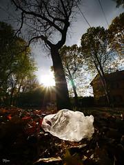 All the secrets we keep (un2112) Tags: wekerle surreal budapest autumn fall november laowa75mm laowa75 laowa trees