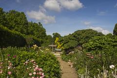 Rose garden in summer (Anxious Silence) Tags: london hydepark summer park outdoors garden