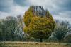 The majestic tree .. (Julie Greg) Tags: tree gress sky nature park majestic canon autumn
