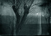 Mondaufgang Ahrenshoop 2015 (whhermann) Tags: nacht mond mondaufgang dars ahrenshoop weide