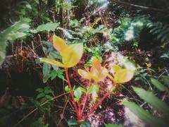 ... (Felipe Smides) Tags: selva lluviosa mapuche lafkenche sur smides felipesmides