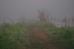 Foggy Sunrise (River-Life) Tags: riverlife nikon d5300 circlebbarreserve florida nature outdoors outdoor foggy morning mist