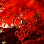 Autumn in Japan thumbnail