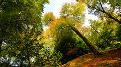 AUTUMN COLOUR (chris .p) Tags: batsford nikon d610 trees gloucestershire england uk autumn 2017 view capture wideangle october colour cotswold cotswolds