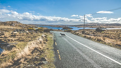 Connemara Roads (Stephane Rossignol) Tags: eireann eire irlande ireland irlanda connemara connamara cogalway sheep mouton sunnyday sunny soleil eau lac loch lake water cloud clouds nuage nuages