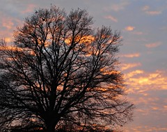 12 - Lumière vespérale (melina1965) Tags: 2017 décembre december bourgogne burgondy nikon coolpix s3700 saintvallier campagne opencountry hiver winter ciel sky nuage nuages cloud clouds arbre arbres tree trees