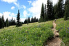 Taking a breather in Meadow with Wildflowers (gerry.bates) Tags: ecmanningprovincialpark nature landscape mountains cascademountainrange meadow wildflowers flowers britishcolumbia canada canon summer hiking trails flora trees slopes alpine