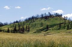 Fire18.tif (NRCS Montana) Tags: fire forestfire babydeanfire