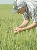 People_NR_31 (NRCS Montana) Tags: soil soils soilhealth farm farming farmland alternativecrops notill drylandfarming beach northdakota people farmer conservationtilling cropresiduemanagement crops springwheat zook