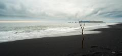 Lonely dead tree (Truebla) Tags: islande iceland vik black beach ocean water clouds fujifilm xm1 samyang 12mm