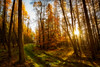 The Green Zone (Augmented Reality Images (Getty Contributor)) Tags: woodland longexposure perthshire landscape leefilters scotland nature autumn trees sunshine countryside canon leaves forest light forgandenny unitedkingdom gb