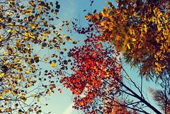 DSC_1904 (FMAG) Tags: 2017 żabieniec zalesie jesien
