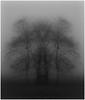 Onderdendam (Schnarp) Tags: boom tree vogel bird hdr kunst art bewerktefoto editedphoto zwartwit bw blackwhite europe europa pentaxk10d