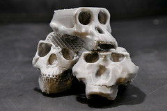 hominid skull (jamescastle) Tags: 3dprint science biology