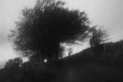 IMAG1139 [ps] - The Long & Windy Road (Anyhoo) Tags: anyhoo photobyanyhoo england uk lane tree bw blackandwhite windswept cumbria westmorland
