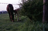 img003 (foundin_a_attic) Tags: horse 1970s hourse