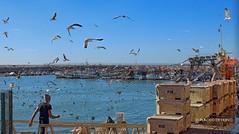 Quarteira (Algarve, Portugal) - Canon EF-S 24 mm STM (Placido De Cervo) Tags: algarve portugal quarteira portogallo mare pesca pesce gabbiani azzurro fish fisherman gaivotas seagulls cielo sky