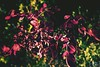 342-365 (danidelgado.es) Tags: adobe alicante canon contraste colour composition digital day eos 365 españa spain film inspiracion art light color inspiration luz magic photoshop project lightroom sky yellow retouch red nature naturaleza love cloud sun m10 eosm summer