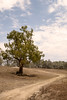 AROUND THE TREE (scatrd) Tags: outbacknsw landscape mynikonlife australia holiday nsw travels landscapephotography 2017 dirttrack travelphotography tree northbourke newsouthwales jasonbruth subject afsnikkor2470mmf28eedvr nikon d810 country nikond810 au