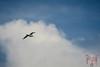 01112017DSC_0080.jpg (Ignacio Javier ( Nacho)) Tags: gaviotas aves flickr páginafotografia faunayflora