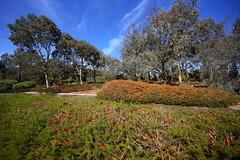 Cranbourne RBG Nov 2017 010 (Graeme Butler) Tags: water landscape history gardens australianplants architecture victoria australia
