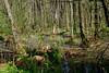 DSC_6545 (FMAG) Tags: kpn kampinoskiparknarodowy polska poland wiosna spring