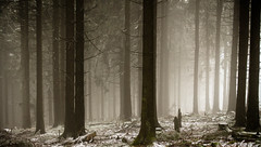 This is not your father's Myst (PetschoX5) Tags: petscho freedomstreaming canon 700d photography fotografie myst cyansworld cyan atrus catherine deutschland germany schnee snow white weiss wald forest bäume wälder dni