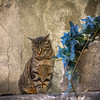 distracted cat ... (Roberto Defilippi) Tags: 2017 882017 rodeos robertodefilippi nikond7100 nikkor2470mmf28 briancon francia france gatto chat cat