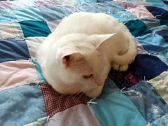 Peaches Relaxing. (dccradio) Tags: lumberton nc northcarolina robesoncounty indoors inside cat quilt comforter blanket meow pet domesticcat feline whitecat squares pattern relax rest samsung galaxy smj727v j7v cellphone cellphonepicture kitty