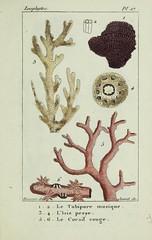 n54_w1150 (BioDivLibrary) Tags: annelida atlases cnidaria echinodermata eels helminths worms universitylibraryuniversityofillinoisurbanachampaign bhl:page=54348096 dc:identifier=httpsbiodiversitylibraryorgpage54348096