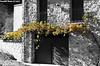 otoño sobre la puerta (tonomf) Tags: otoño fall puerta parra uva grapes hojas bejís nikon nikond5100