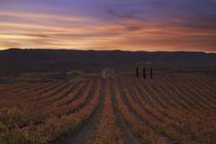 O -  III (Rafael Díez) Tags: españa larioja badaran paisaje otoño viñas arboles guardaviñas filtro sunset atardecer rafaeldíez nubes