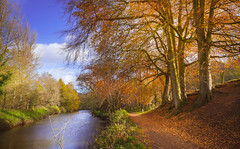 Along the riverside (Dhina A) Tags: sony a7rii ilce7rm2 a7r2 variotessar t fe 1635mm f4 za oss sonyfe1635mmf4 sel1635z riverlagan riverside walk woods